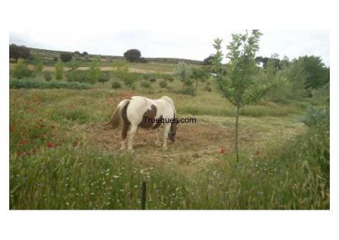 Pony y su potro